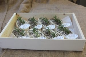 iks ohg Les Voeu des Deux-Sevres Kiste mit 8 Stück